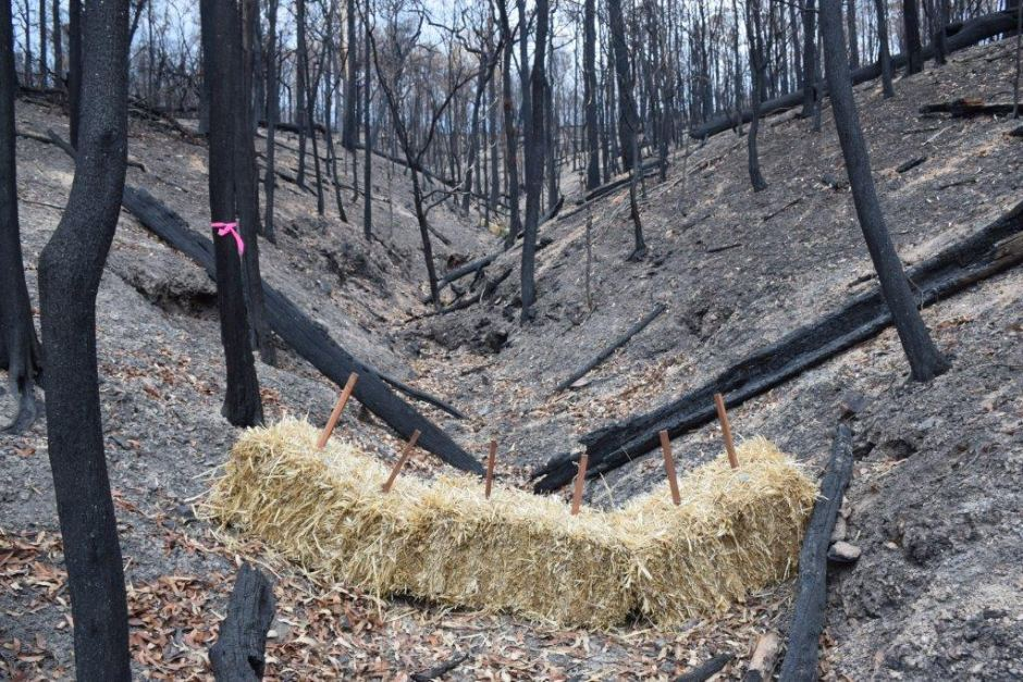New soil erosion research improves bushfire recovery