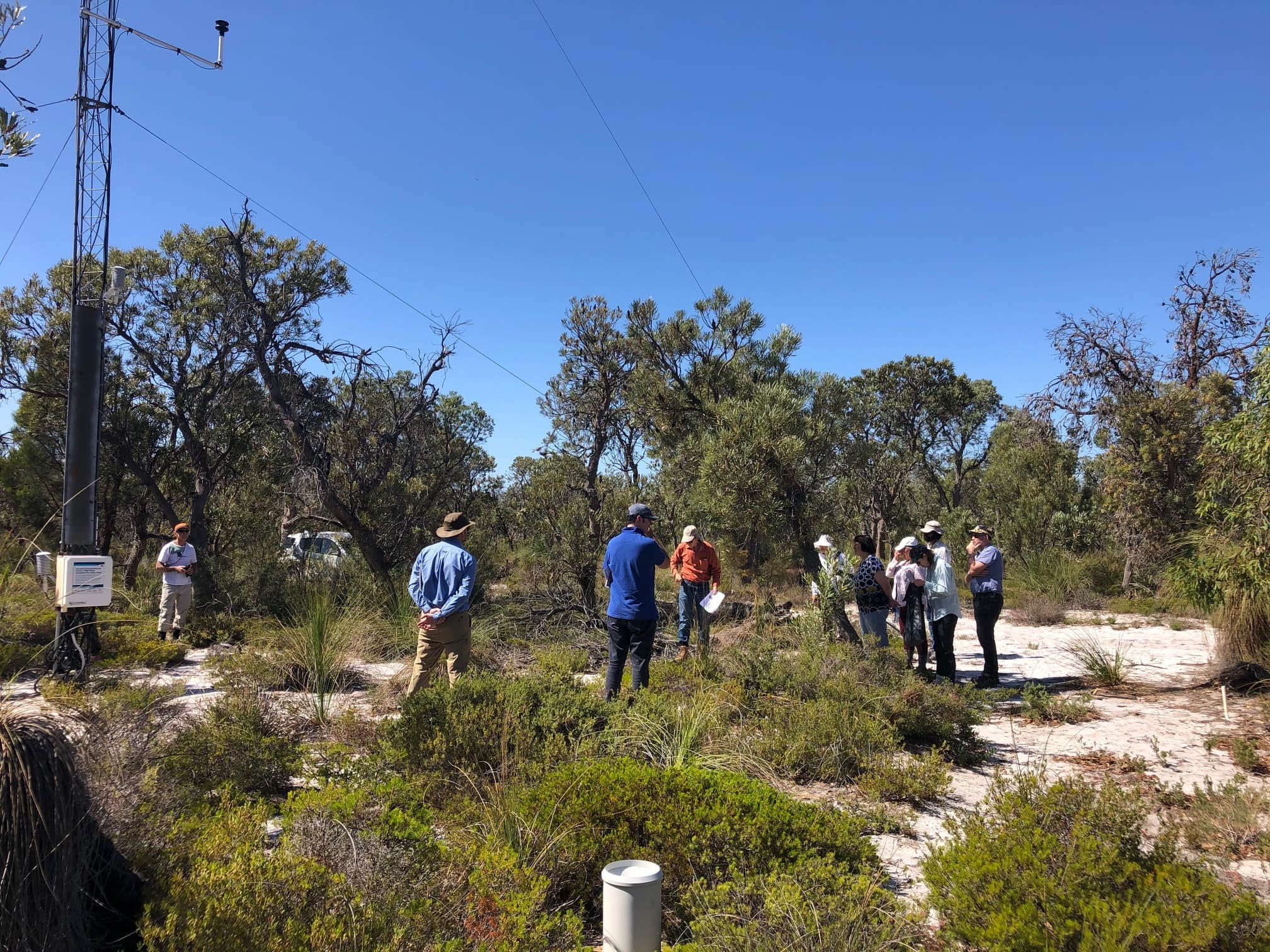 Site of the month: Gingin Banksia Woodland SuperSite