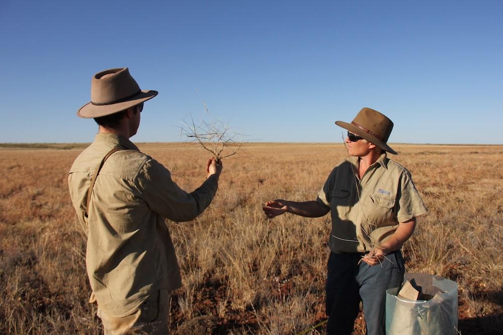 Aussie plants used to study eco-evolutionary dynamics