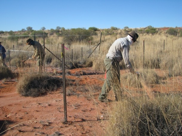 Increasing temperatures and drought frequency may diminish the benefits of fertilisation in managed grasslands