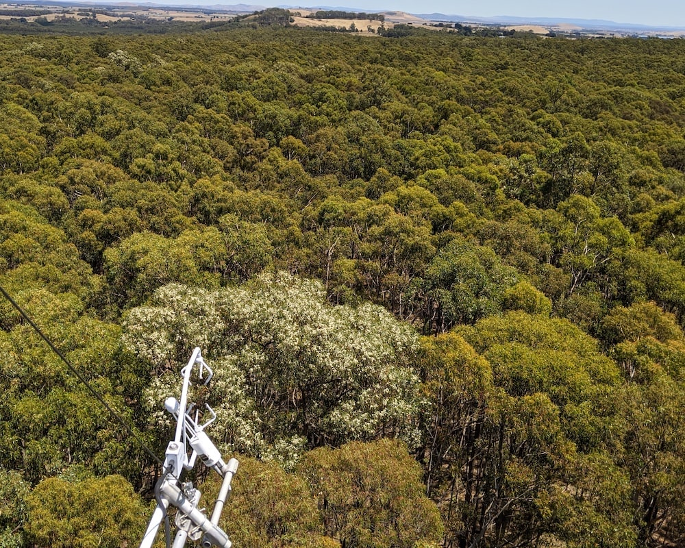 Site of the Month: Wombat Stringybark Eucalypt SuperSite