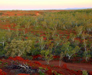 01 Pilbara woodland - Australia 1000