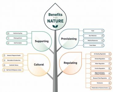 Ecosystem_Services_Andy_Lowe_article_v2_1000