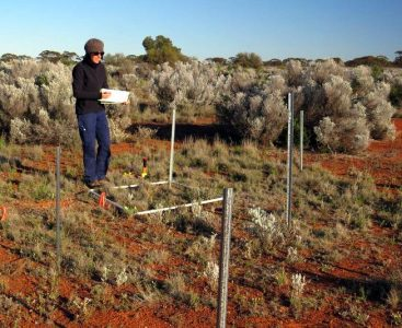 IMG_1086 Rachel Standish monitoring droughtnet plot 17Sep15_crop800