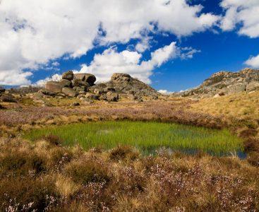 Reedy pool within Sphagnum Bog on Mt Buffalo, Victoria, Australia