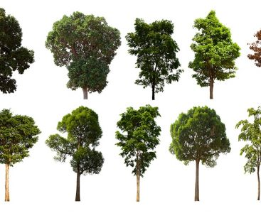 Tree,Set,,Isolated,Tree,Set,On,A,White,Background