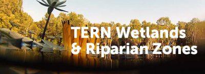 wetlands-thumbnail